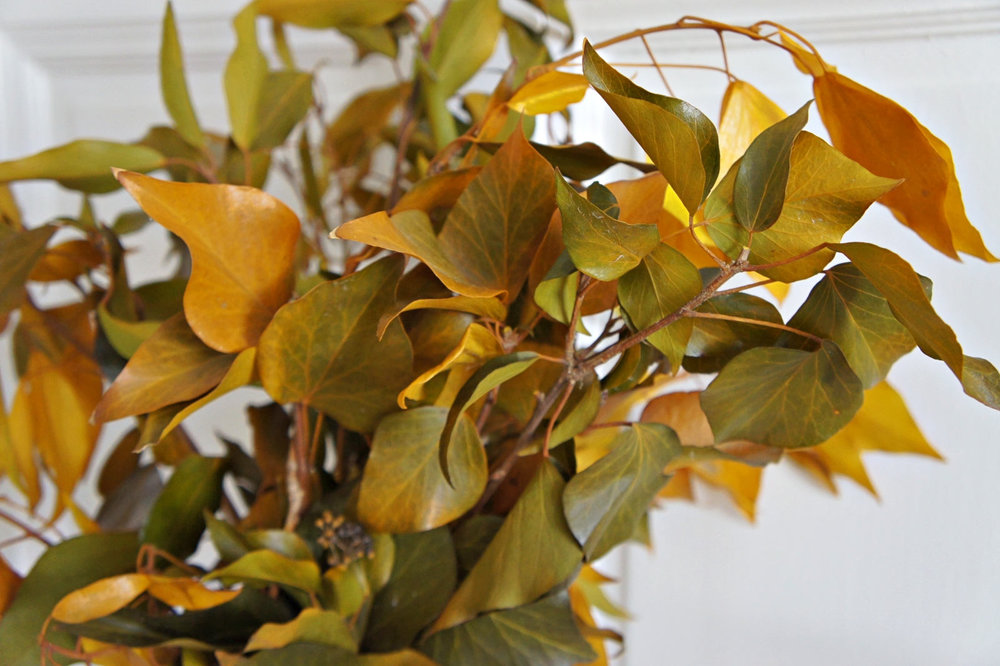 IVY HEDERA$27.17/bunch - 4oz. BUNCHES