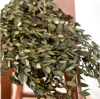 TEAR DROP EUCALYPTUS  $9.75/bunch or $9.50 for 12+ bunches - 8oz. BUNCHES (15 - 28