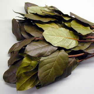 SALAL$7.70/bunch or $7.45 for 12+ bunches - 4 - 5 oz. BUNCHES