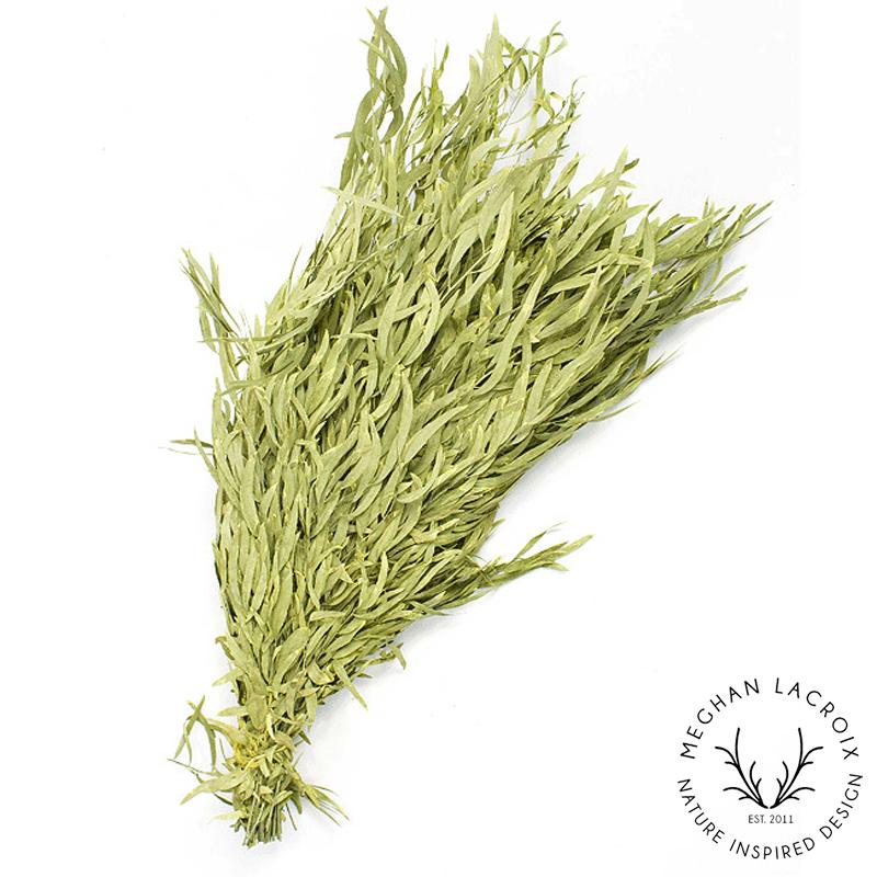 Nicoli / Willow Eucalyptus - Chartreuse -