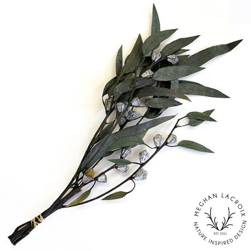 Eucalyptus Pods - Green -