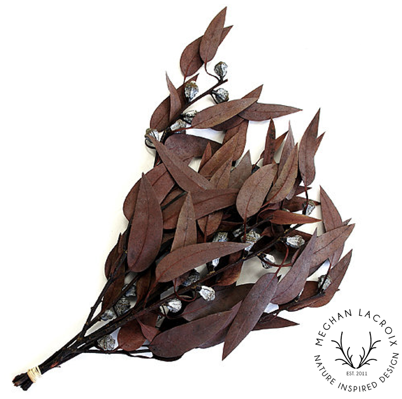 Eucalyptus Pods - Red -