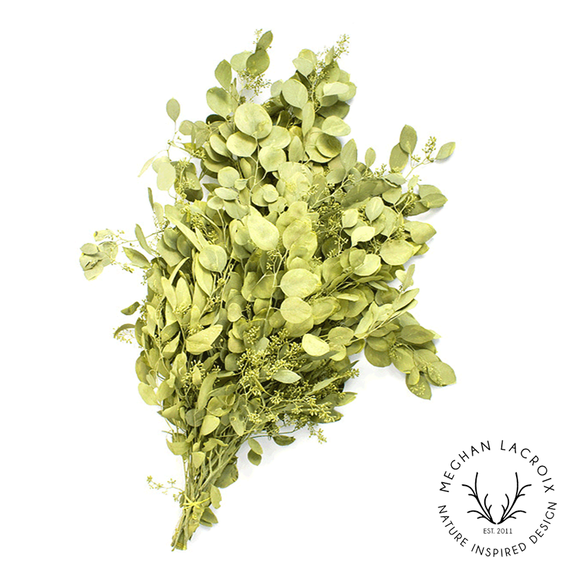 Seeded Eucalyptus - Chartreuse -