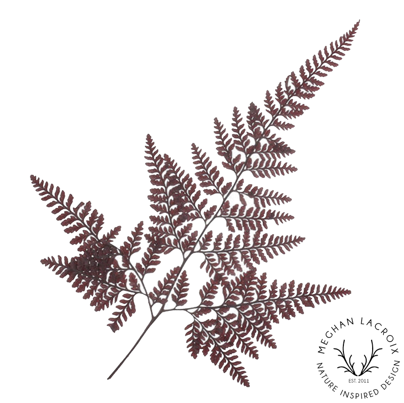 Davalia Fern - Wine -