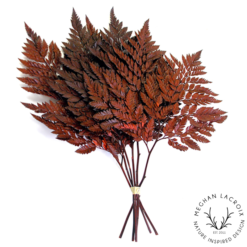 Leatherleaf Fern - Red -