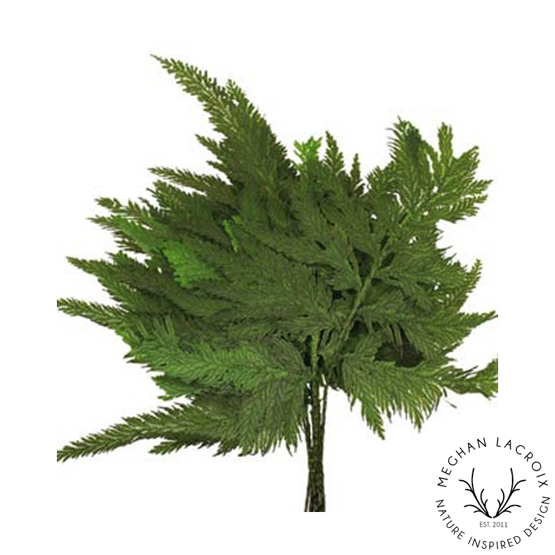 Colombian Fern -
