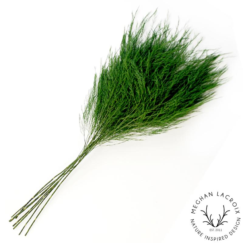 Tree Fern -