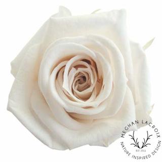 Creamy White -