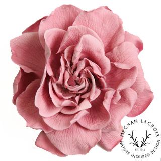 Gardenias -Pink -