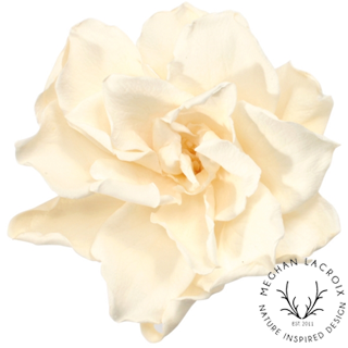 Gardenias - Creamy White -