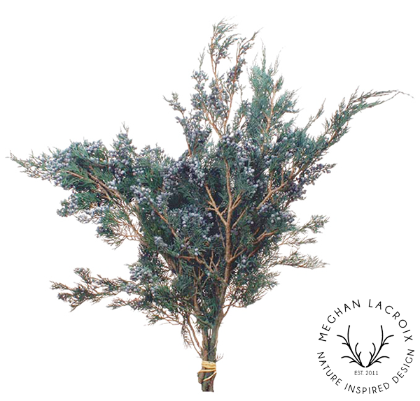 Blueberry Juniper -