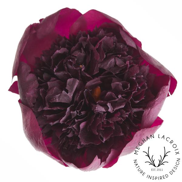 Peonies - Raspberry -