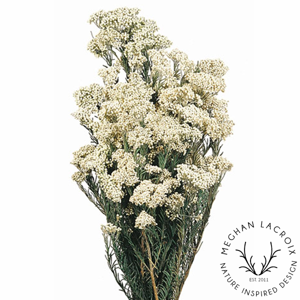Rice Flowers - White -