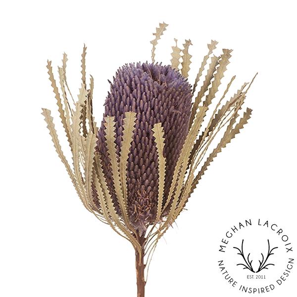 Banksia Hookerana - Lavender -