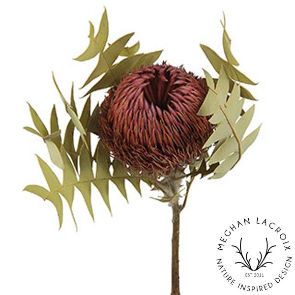 Banksia Baxteri - Pink -