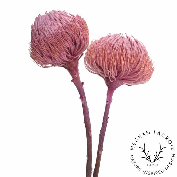 Banksia - Pink -