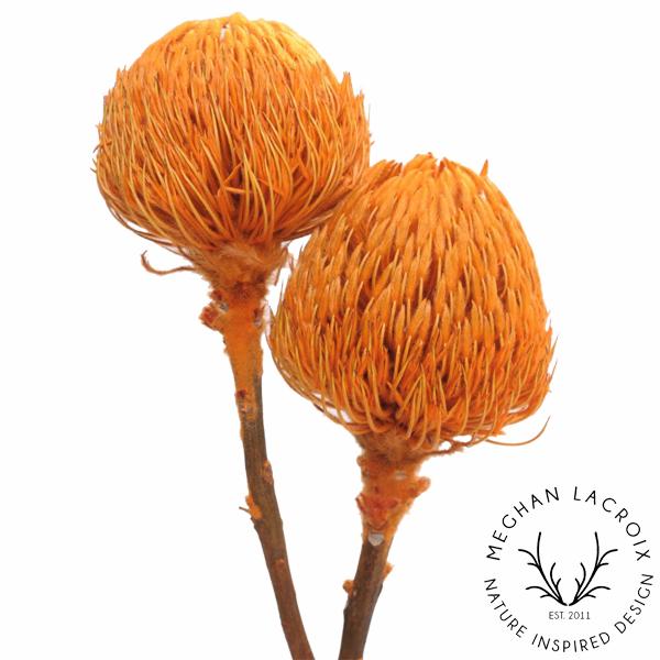 Banksia - Orange -
