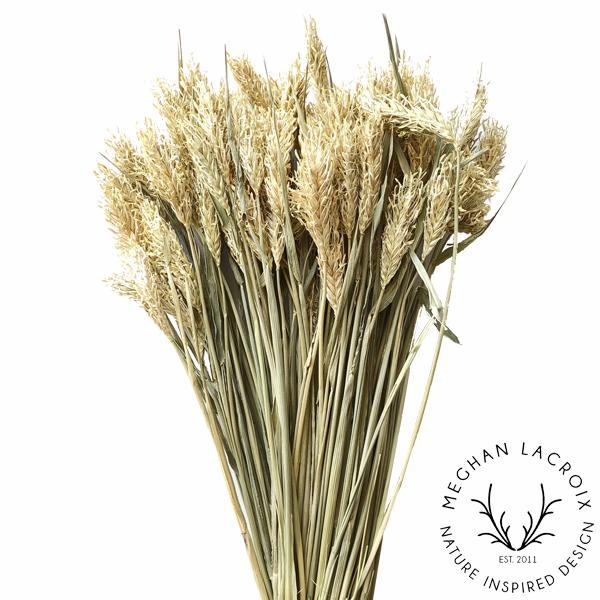 Hooked Barley -