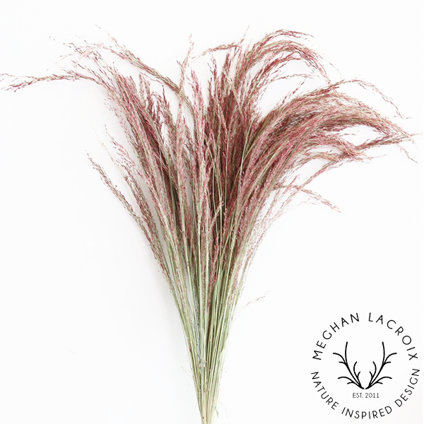 Red Silk Grass -