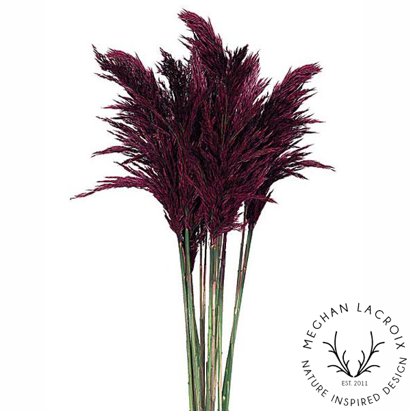 Plume Reed Grass - Merlot -