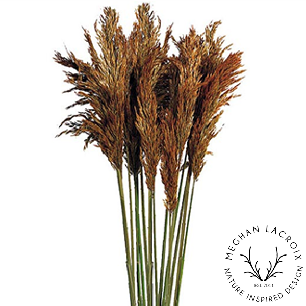 Plume Reed Grass - Autumn -