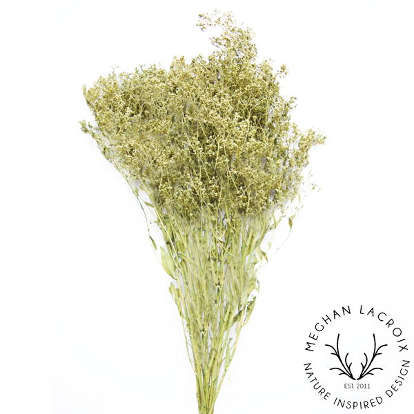 Sesame Bloom - Basil -