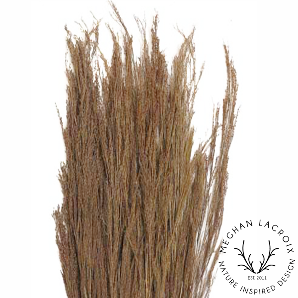Broom Reed -