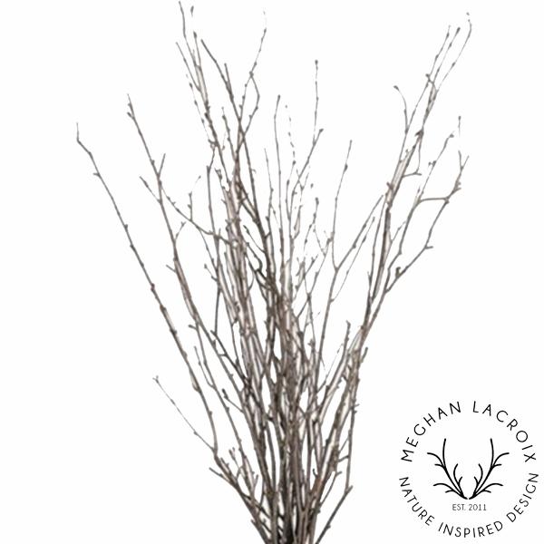 Birch Branches -