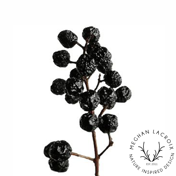 Privet Berries -