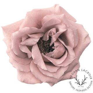 Noisette Rose - Mauve Pink -