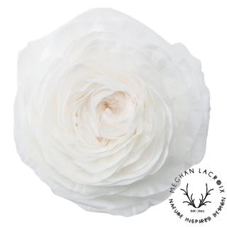 Ranunculus - White -