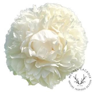 Peonies - Creamy White -