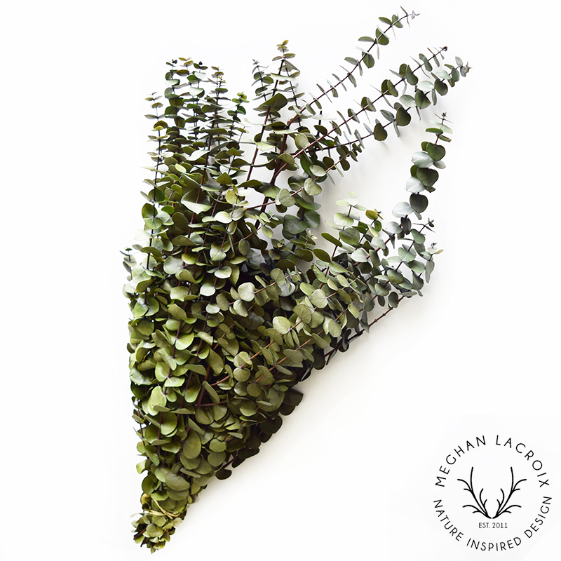 Spiral Eucalyptus - Olive -