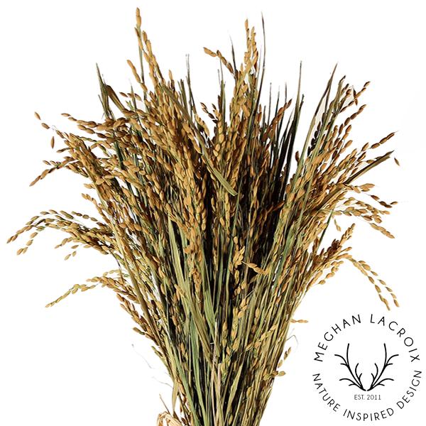 Ornamental Rice