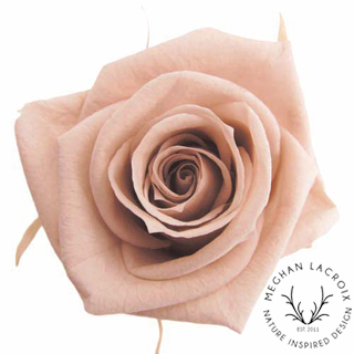 Nude Pink Roses