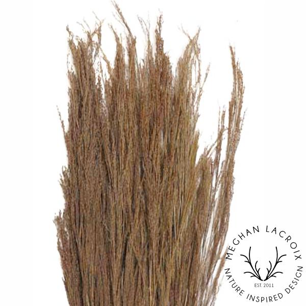 Broom Reed