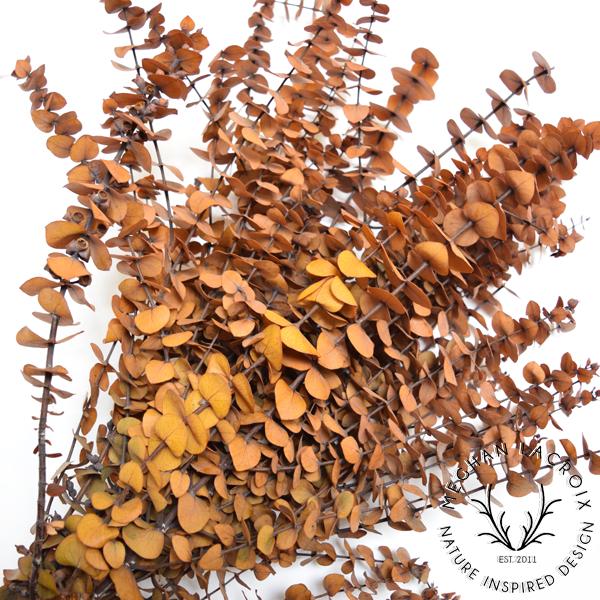 Chestnut Spiral Eucalyptus