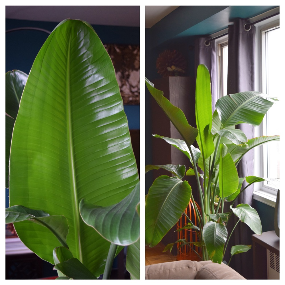 """Yes!!  I can see the light!"", said the fully flourished plant."