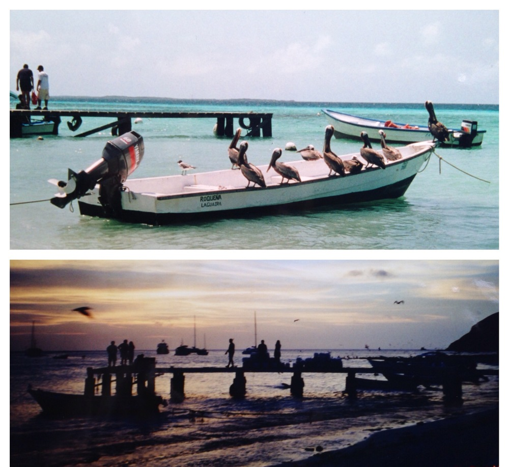 Los Roques, Venezuela... my friend and I watched the pelicans from the afternoon into the evening.