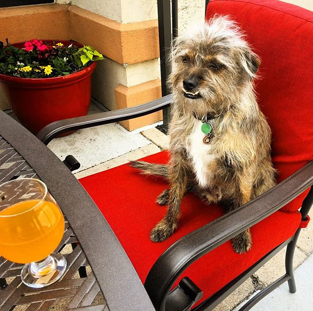 We've got perfect weather over on our patio! Swing by and enjoy it with your furry best friend! *Humans welcome as well* #fortcollins #craftbeer #patiopatiopatio