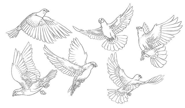 #pigeons #artofday #sketch #wip all I did this weekend was chill with my cat and sketch birds