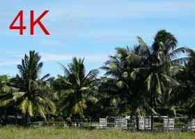 4k_trees.jpg
