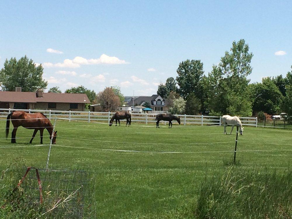 Horses in Pasture.jpg