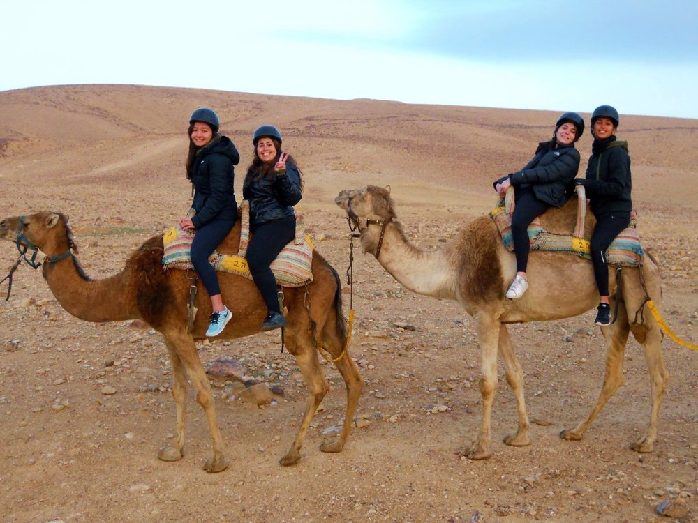 Early morning camel rides in the Negev Desert.