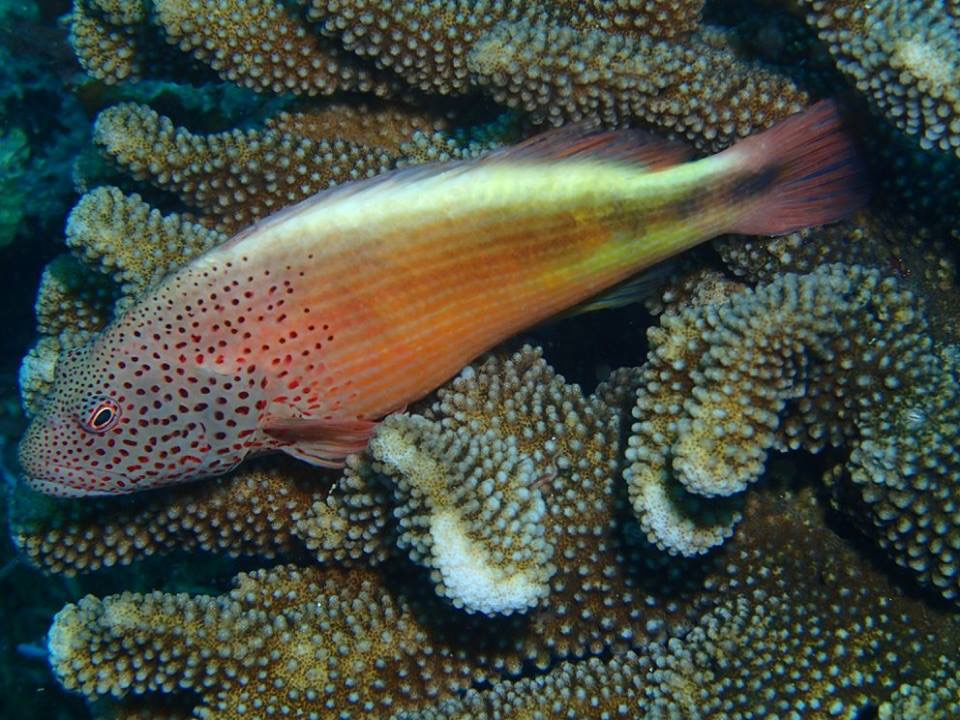 redfish 2.jpg