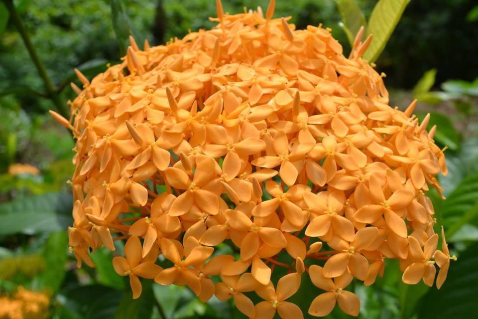 flower tropicall.jpg