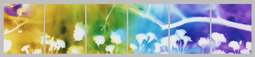 F90, 11X84 (6 11x14 panels)