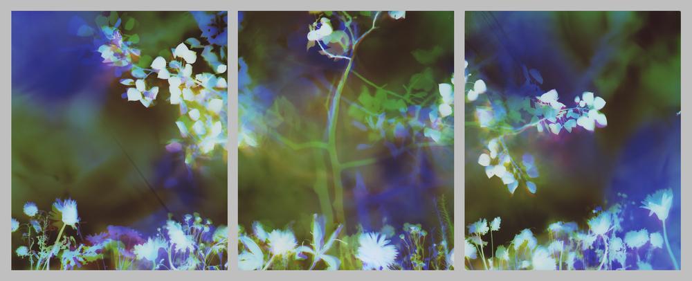T61 3 triptych.jpg