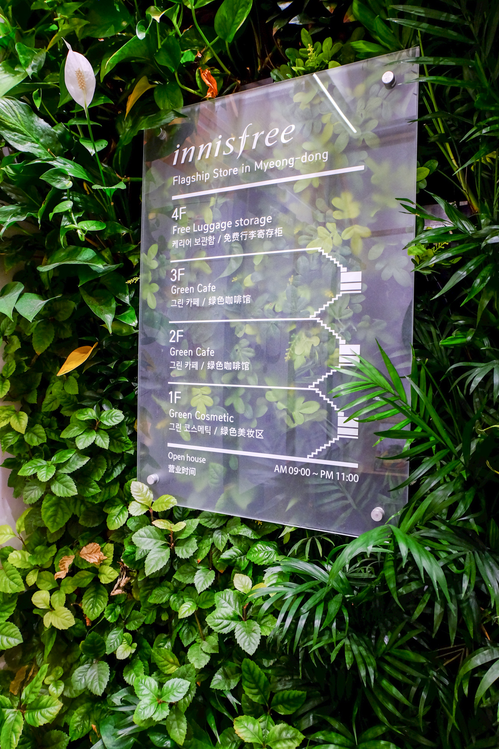 innisfree_green_cafe