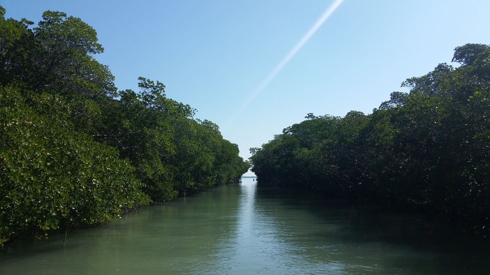 through the everglades